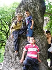 Children with disabilities hanging on a tree trunk at one of the historic sites.