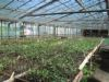 HDP greenhouse with small plants